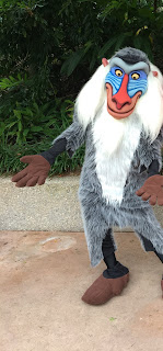 Rafiki Animal Kingdom Disney World