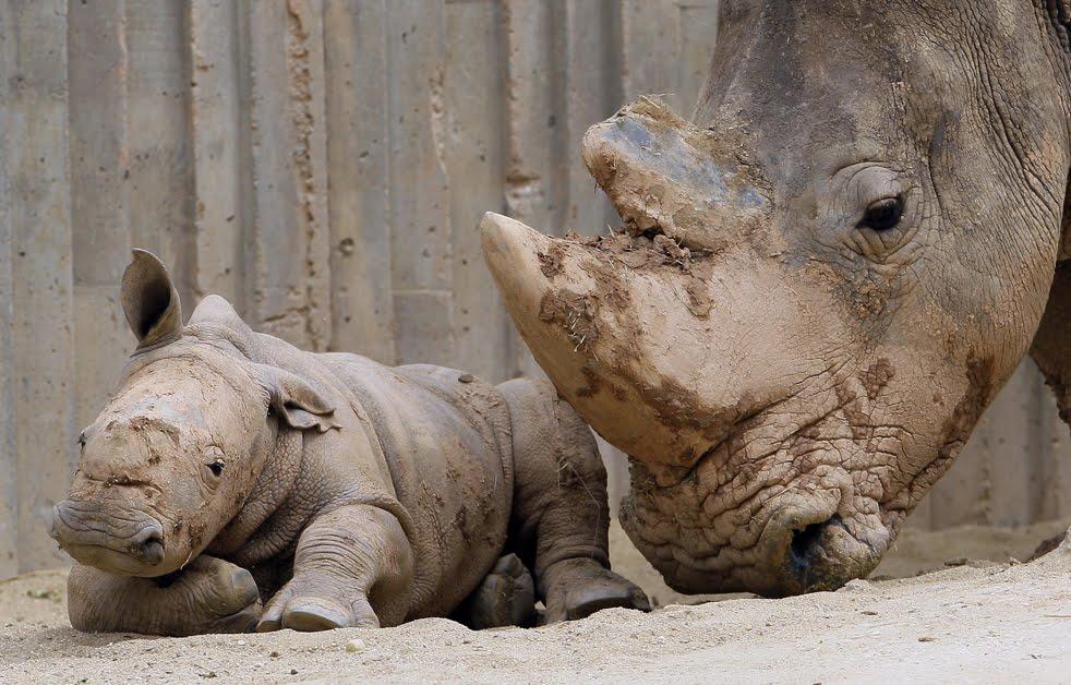 Unique Animals blogs: zoo animals in cages Pictures & Photos