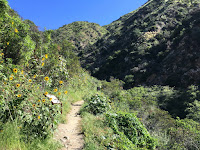 Van Tassel Ridge Junction along Fish Canyon Trail, Angeles National Forest