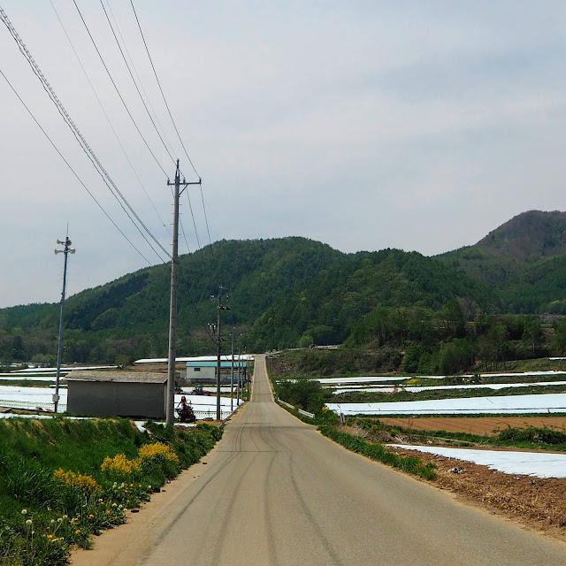 川上村 レタス畑