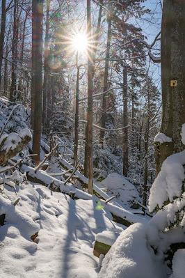 Rundweg Felswandergebiet  Wandern im Nationalpark Bayerischer Wald 24