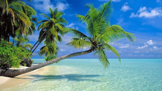 Kokos owoc zastosowanie