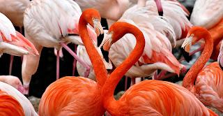 flamingo,beautiful birds and their names