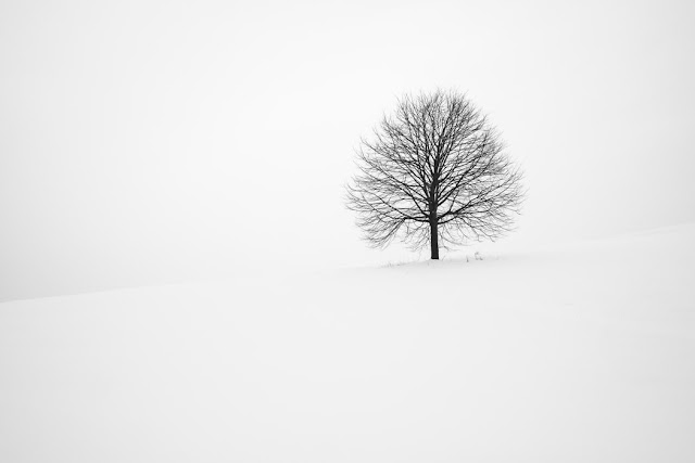 Withered tree in the snow