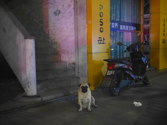 pug sitting next to stairs in Zhongshan, China