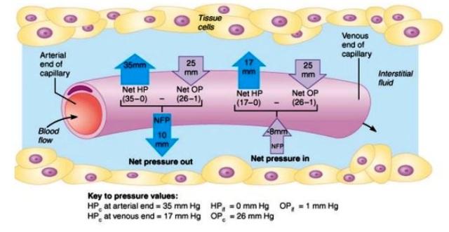 mekanisme pertukaran cairan dalam tubuh