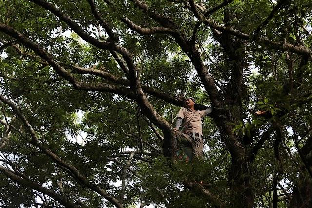 Зеленая охота: тайваньские биологи спасают уникальную флору острова