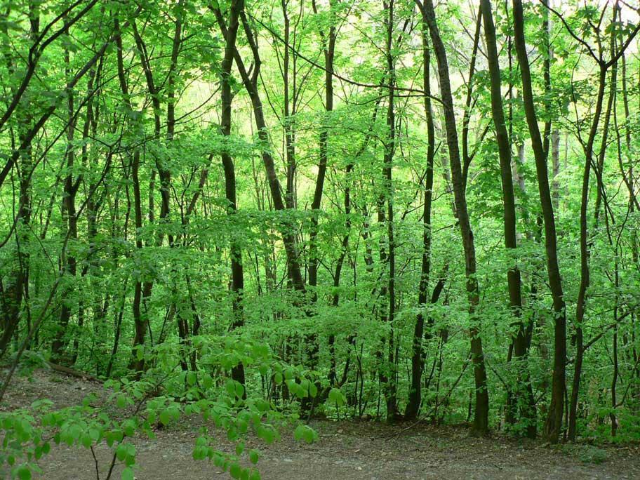 Elebe austria en espa ol los bosques de viena for Medio en el que habitan los arboles