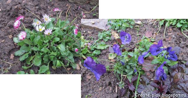 цветы распустились зимой в декабре