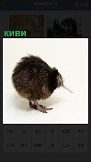 птица с длинным клювом под названием киви