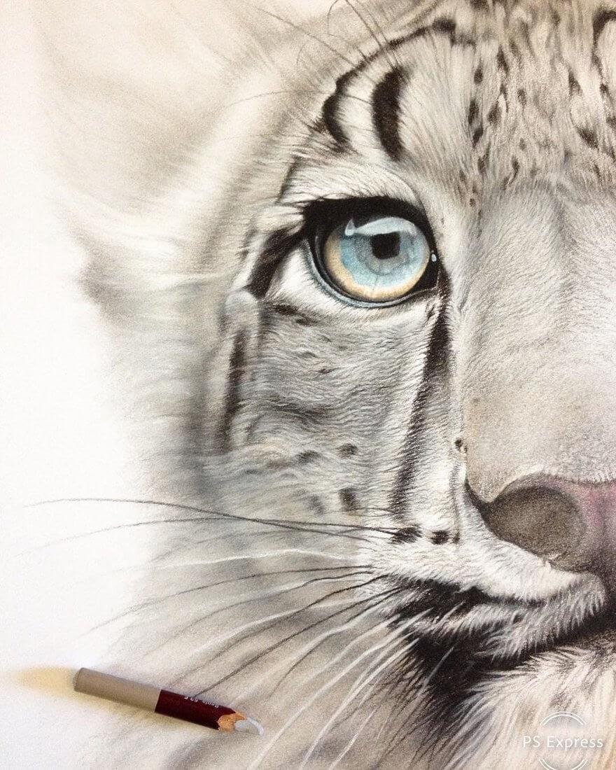 06-Snow-Leopard-Kitten-mART-Realistic-Wildlife-Animal-Drawings-www-designstack-co
