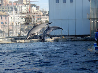 ジェノヴァ水族館のイルカ