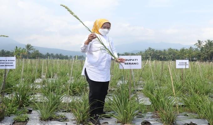 Budidaya Sedap Malam di Kabupaten Serang jadi Obyek Wisata Alam