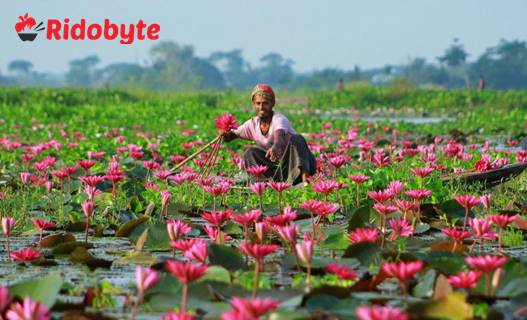 Paragraph | The Natural Beauties Of Bangladesh