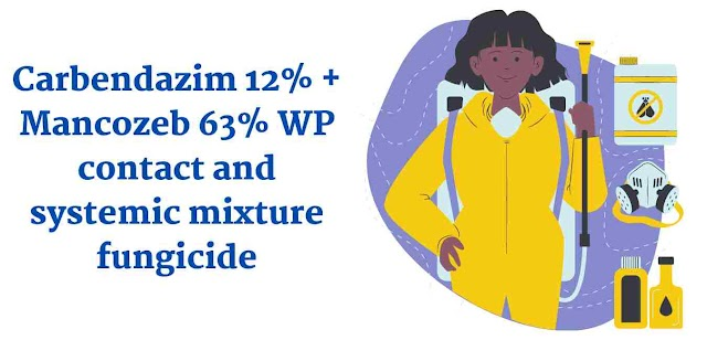 Carbendazim 12% + Mancozeb 63% WP contact and systemic mixture fungicide