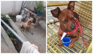 Cão da raça pitbull invade casa e mata cão de estimação de idosos em Picuí