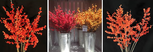 Ilex berry colors