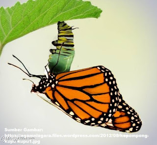 Kepompong Puasa, dari Ulat Menjadi Kupu-kupu
