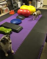 Greatmats foam floor mats garage dog area