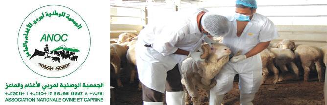 توظيف طبيبين بيطريين بالجمعية الوطنية لمربي الأغنام و الماعز