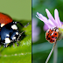 Swarms Of STD-Riddled Ladybirds Are Arriving In Britain