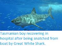 https://sciencythoughts.blogspot.com/2020/07/tasmanian-boy-recovering-in-hospital.html