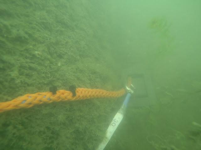 Veden alla otetussa kuvassa näkyy leväpeitteisen kiven juuressa oleva sukelluslinjan loppupaino, josta lähtee pintaa kohti oranssi poijuköysi.