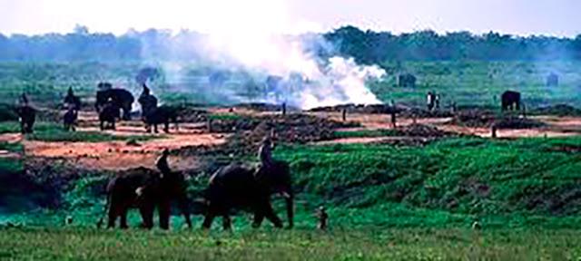 Gambar Taman Nasional Way Kambas Di Lampung