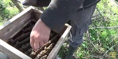 Μελίσσσι σε παραδοσιακό κουβέλι VIDEO