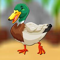 Play AvmGames Mallard Duck Esc…