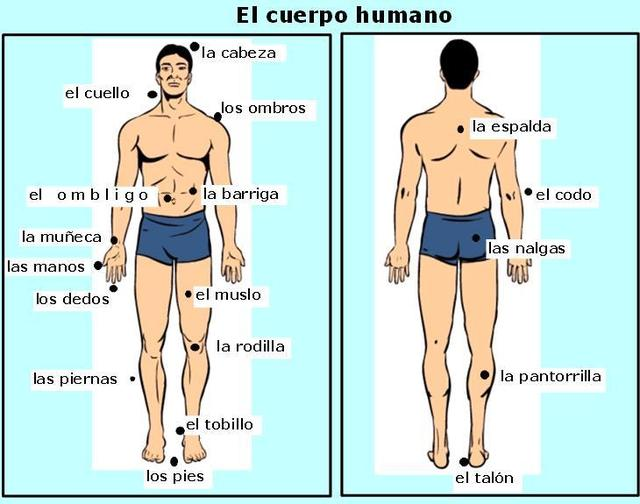 extremidades inferiores del cuerpo humano y sus partes