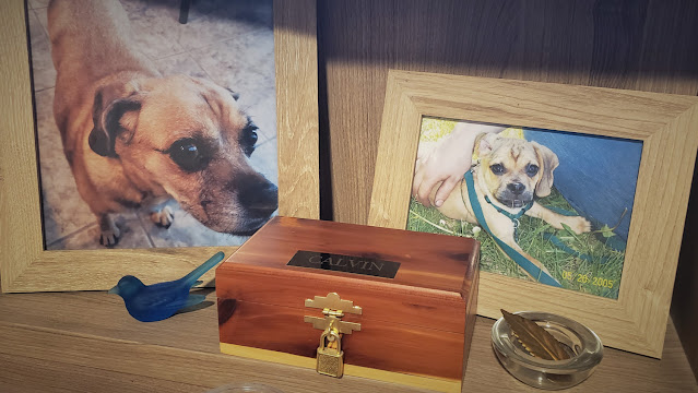 Calvin's Memorial. A memorial to a dog lost during the covid pandemic. Love Letter to Loss on losing a pet at this time.