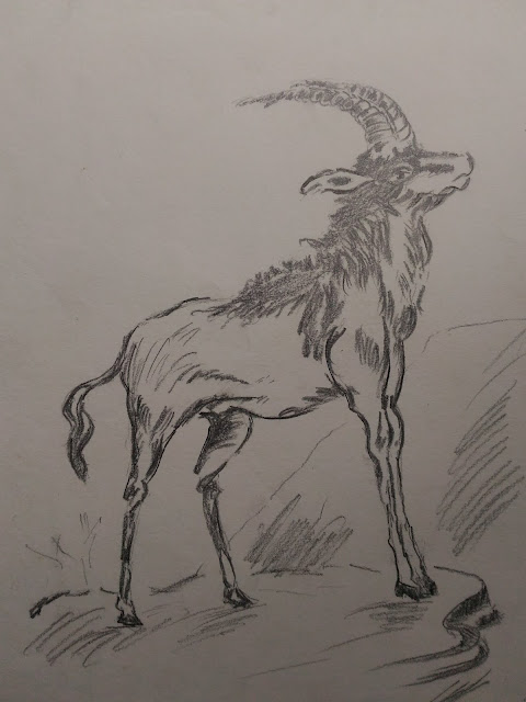 African Animal charcola pencil drawing