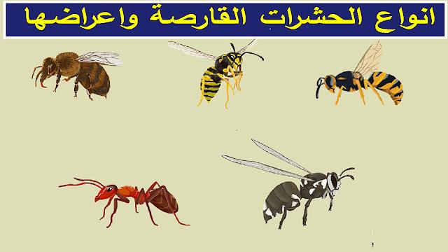 """""""انواع الحشرات القارصة"""" """"انواع الحشرات الادغة"""" """"شكل لدغة حشرة"""" """"شكل لدغة حشرة البق"""" """"شكل لدغة حشرة الفراش"""" """"شكل لدغة حشرة القراد"""" """"علاج لدغة حشرة"""" """"علاج لدغة حشرة البق"""" """"علاج لدغة حشرة الفراش"""" """"اعراض لدغة حشرة القراد"""" """"علاج لدغة حشرة النمر الاسود"""" """"شكل قرصة حشرة البق"""" """"اعراض لدغة حشرة البق"""" """"علاج لدغ حشرات الفراش"""" """"شكل لدغة بق الفراش"""" """"شكل لدغات بق الفراش"""" """"شكل قرصة بق الفراش"""" """"علاج قرصة حشرة الفراش"""" """"اعراض لدغة بق الفراش"""" """"علاج لدغ بق الفراش"""" """"اعراض لسعة حشرة القراد"""" """"انواع الحشرات القارصة"""" """"انواع الحشرات واشكالها"""" """"انواع الحشرات اللادغة"""" """"ما هي انواع الحشرات"""" """"انواع يرقات الحشرات"""" """"انواع حشرات واشكالها"""" """"انواع الحشرات الطائرة واسمائها"""" """"الحشرات اللادغة"""" """"ما هي انواع الحشرات التي تصيب الكلاب"""" """"ما هي انواع الحشرات اللاسعة"""" """"ما هي انواع الحشرات الطائرة"""" """"ما هي أنواع الحشرات الضارة"""" """"ما هي انواع الحشرات النافعه"""" """"ما هي أنواع حشرات الرطوبة"""" """"ما هي انواع حشرات المنزل"""" """"ما هي انواع حشرات"""" """"انواع اليرقات في الحشرات"""" """"اسماء انواع حشرات"""" """"انواع الحشرات الطائرة"""" """"الحشرات الطائرة واسمائها"""""""