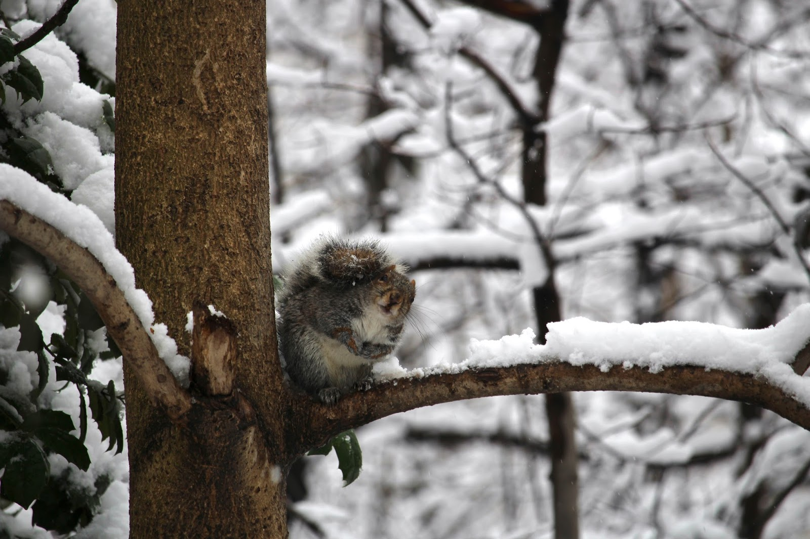 Cheeky squirrel poses in the snow