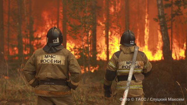 """""""Ад только начинается"""": Кто ответит за лесные пожары в России"""