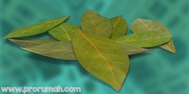 7 Bahan Alami yang Ampuh Mengusir Tikus - daun salam