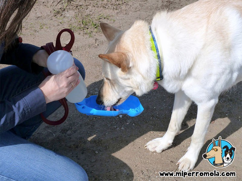 Can de Palleiro bebiendo agua de una botella bebedero