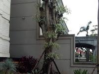 Jasa Pembuatan Taman Murah di Pati - Jasa Taman Rumah dan Kolam Minimalis Profesional