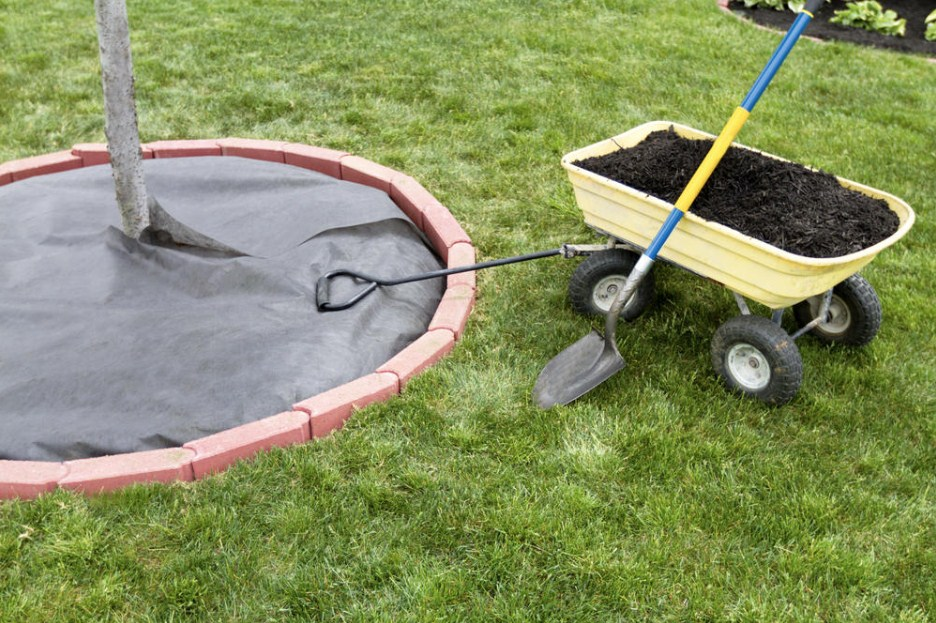 How to Choose a Garden Wheelbarrow