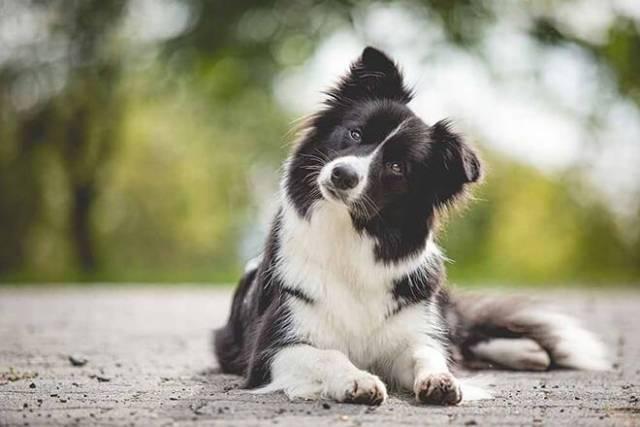 """""""Она хорошая девочка"""": бизнесмен оставил собаке в наследство $5 млн"""