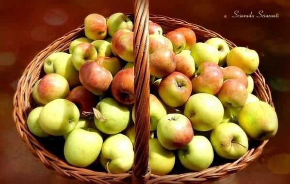 Cesto di mele gialle con screziature rosse