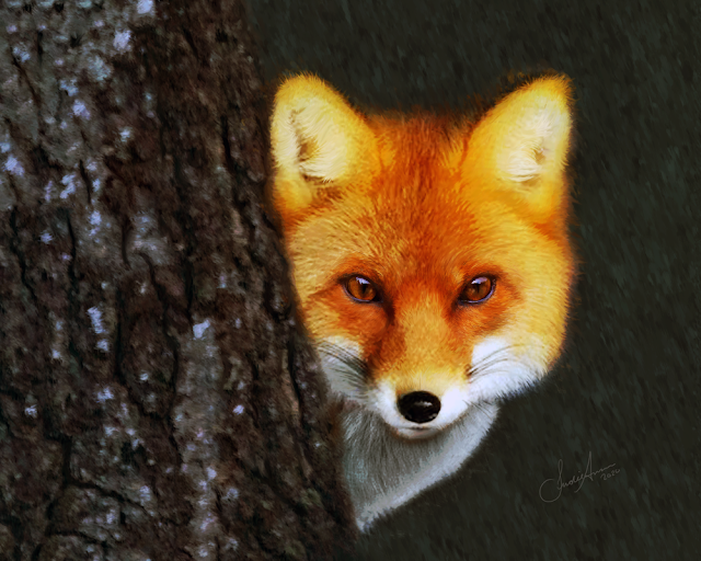 Red Fox Painting Newfoundland Wildlife Art