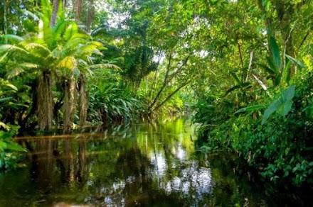 Βραζιλία: Ο στρατός θα προστατεύει το δάσος του Αμαζονίου