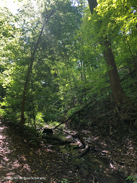 Forest bathing in the ravines of Shadow Falls Park in Saint Paul, Minnesota