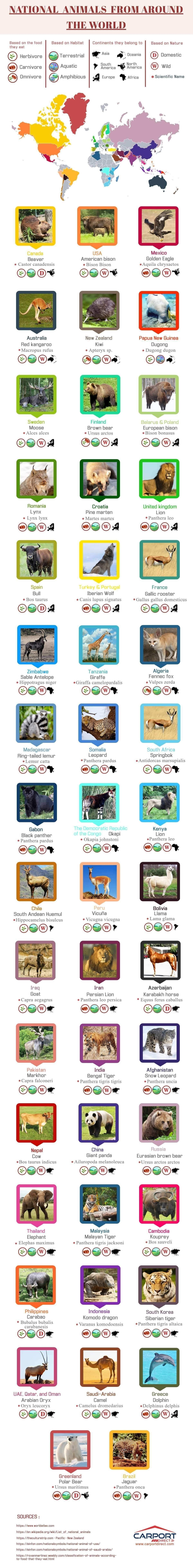 National Animals from Around the World #infographic