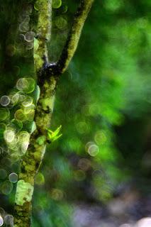 Bokeh photography with a Pentacon lens.