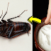 Most Effective Ways on How To Get Rid of Cockroaches Fast and Permanently