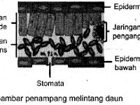 Ringkasan Materi IPA SMP: Sistem Organ Dalam Kehidupan Tumbuhan (Bagian 1)