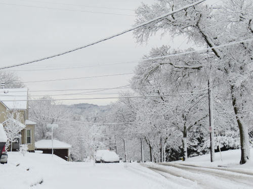 snow covered trees and street